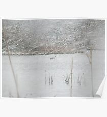 Duck on water in snowstorm Poster