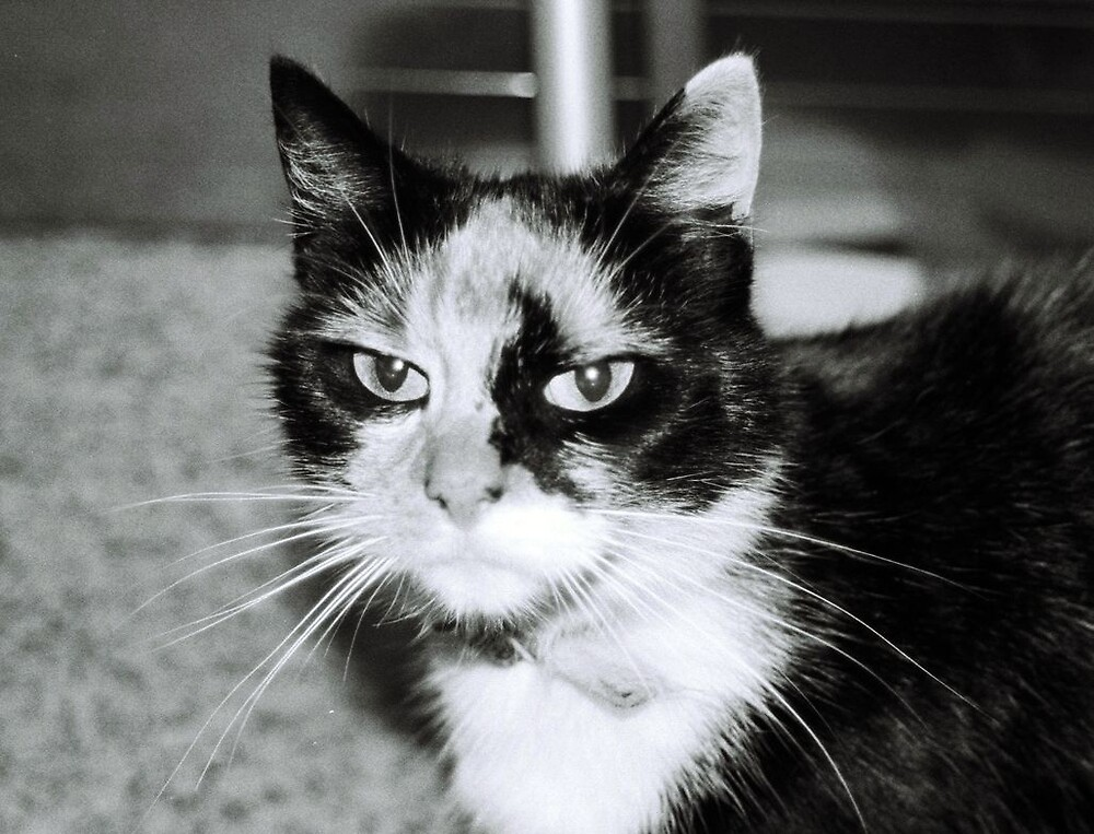 Tuppence the Angry Cat by Shannon Byous Ruddy