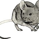 House Mouse Squeak by Ciara Barsotti