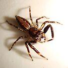 Spider by poshta