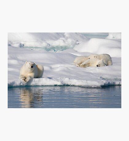 Respite On Ice Photographic Print