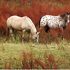 Sweet pastures by su2anne