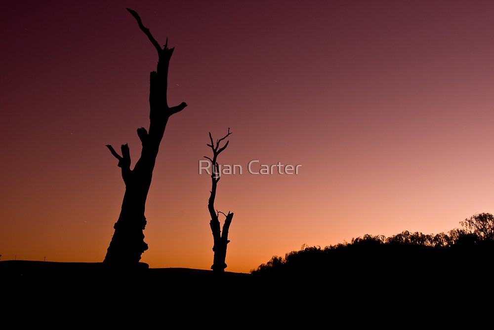 Dead, River Trees. by Ryan Carter