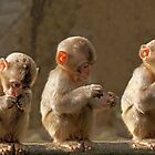 Three cute baby monkeys by CanDuCreations