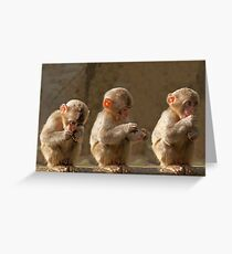 Three cute baby monkeys Greeting Card