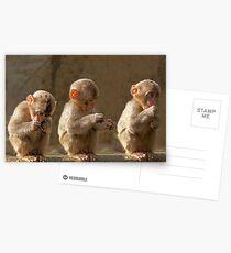Three cute baby monkeys Postcards