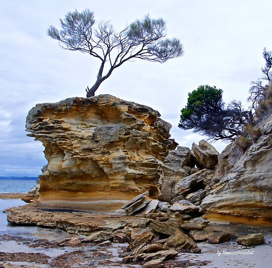 TASMAN PENINSULA ~ Tree on Rock Revisited by tasmanianartist by tasmanianartist