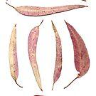 pink gum leaves scanogram by Janine Paris