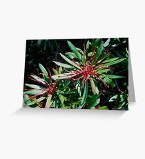 FLORAL ~ JUST PHOTOS ~ Tasmanian Waratah Along the Trail by tasmanianartist Greeting Card
