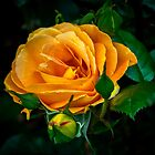 Yellow Rose by Bette Devine