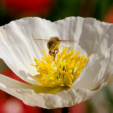 Busy Bee at work by discoden