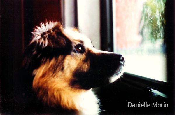 Pondering Pooch by Danielle Morin