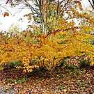 Golden Fall/Autumn by AnnDixon