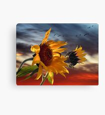 hot summer wind Canvas Print