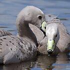 Cape Barren Goose by Vickie Burt