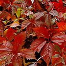 In leaf by Alojzy