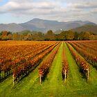 Vineyards of Franciacorta by annalisa bianchetti