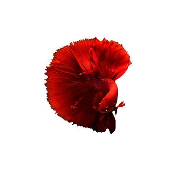 Blood Red Betra Fish  by gravtee