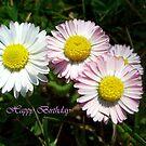 Happy Birthday! by Ana Belaj