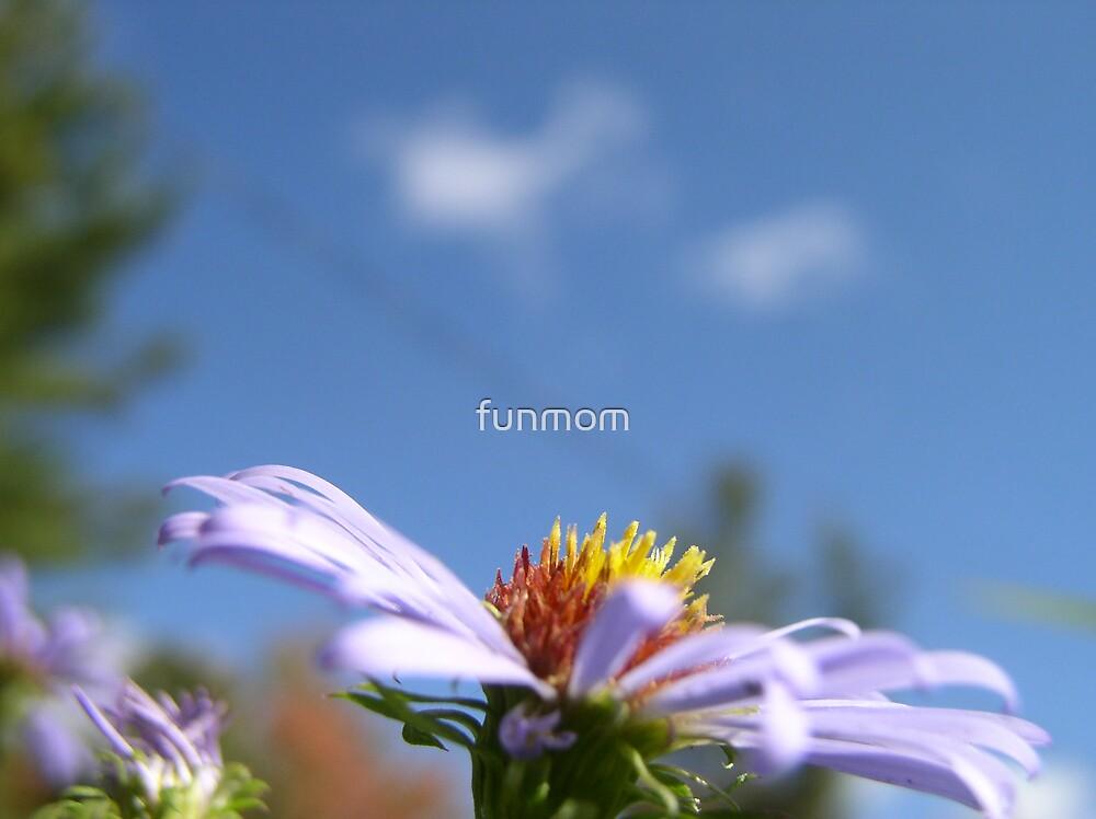 Flower in the Sky by funmom