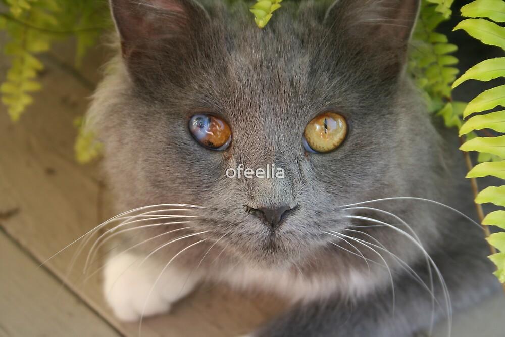 HEBA MY KITTY by ofeelia
