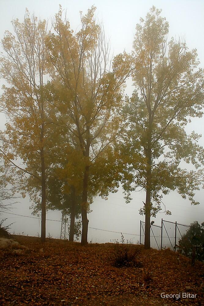 Foggy Trees by Georgi Bitar