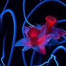 Electric Daffodils by Shaun Colin Bell