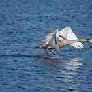 Running on Water by kernuak