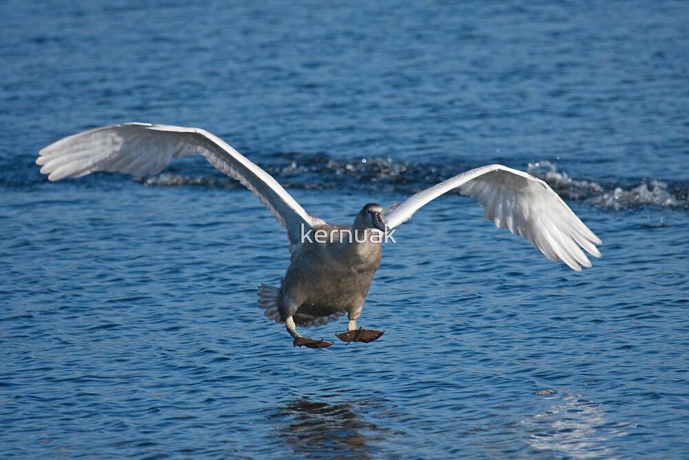 The Landing by kernuak