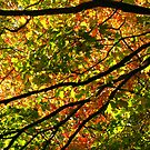 Behind the Maples by Tammy F