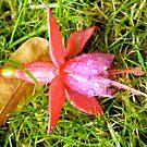 Fallen Flower by dougie1