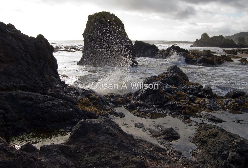 Sea Spray by Susan A Wilson