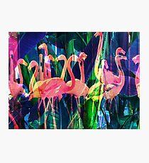 Flamingo Dance Photographic Print