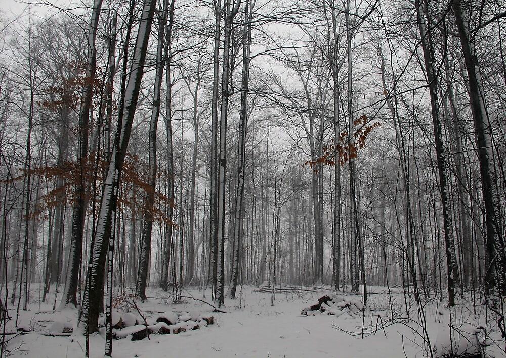 Winter Storm In The Bush by Debbie Oppermann