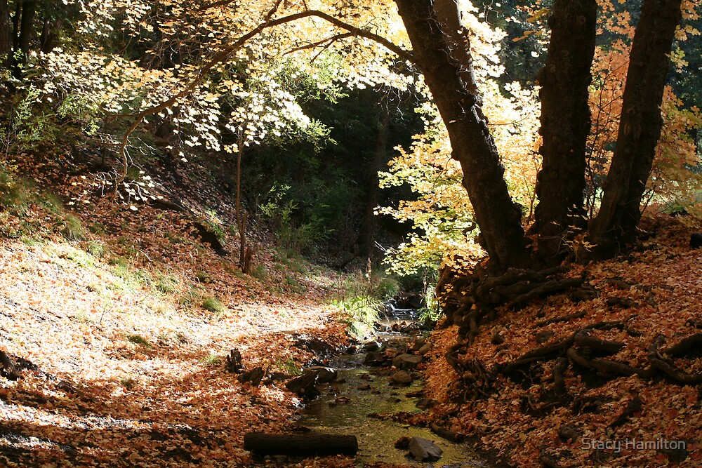 Nogal Canyon Road Stream in October by Stacy Hamilton