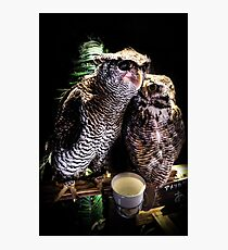 Asakusa Adventures: Avian Allies Photographic Print