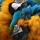 Love Birds by John Kelly Photography (UK)