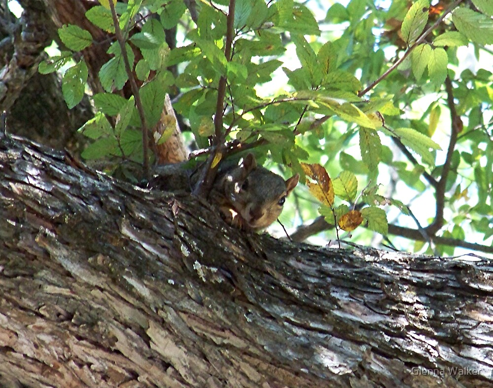 Can You See Me Now? by Glenna Walker