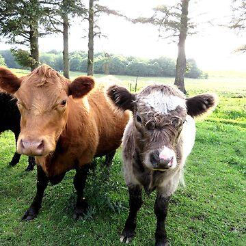 Danish kalf and cow by Bumblebeegirl