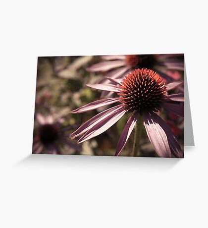 Faded Petals Greeting Card