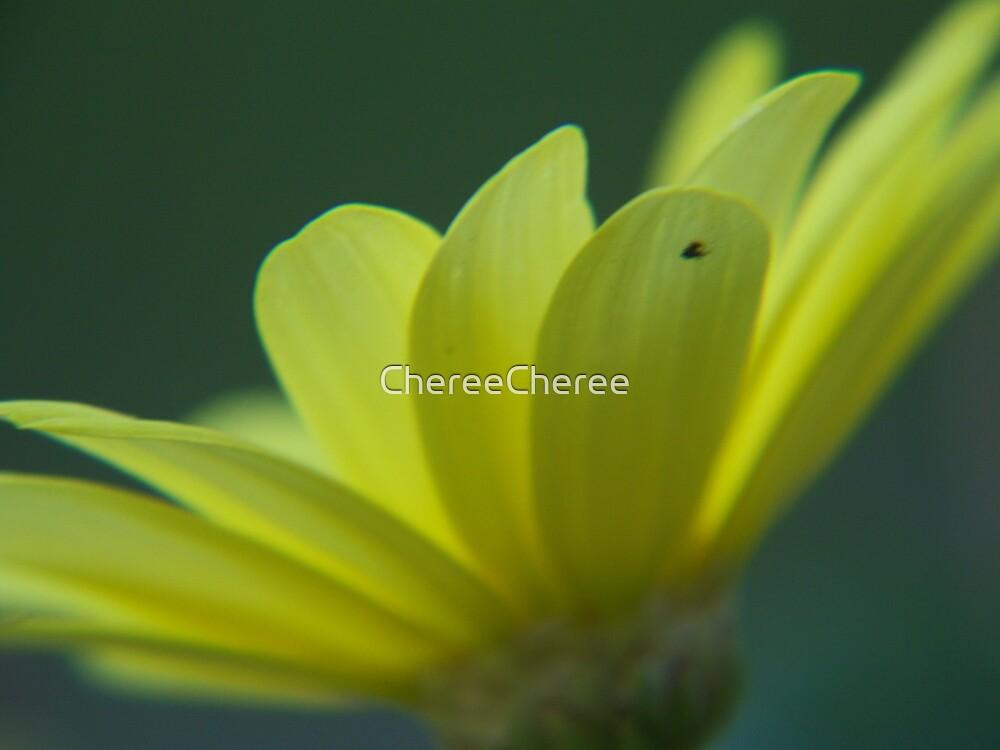 Daisy 2 by ChereeCheree