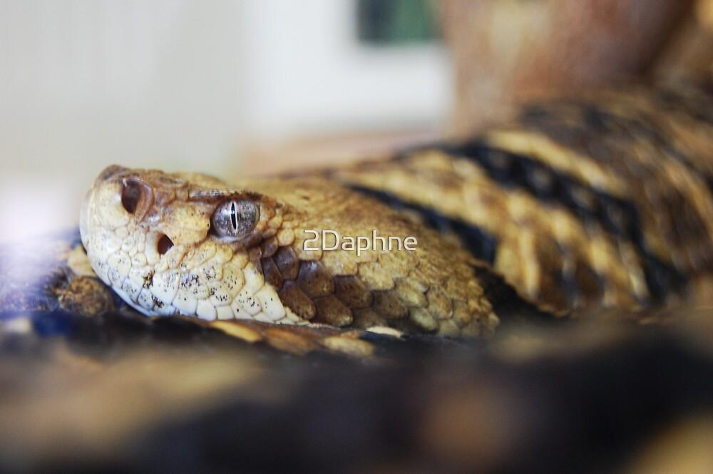 Snake by 2Daphne