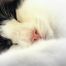 Sleeping Cat by Hollie Cook