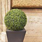 Topiary Ball by Fara