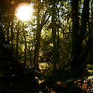Friday Woods by newbeltane