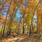 Fall Along The Big Wood River by Jennifer Hulbert-Hortman