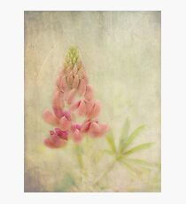 Lupin Photographic Print