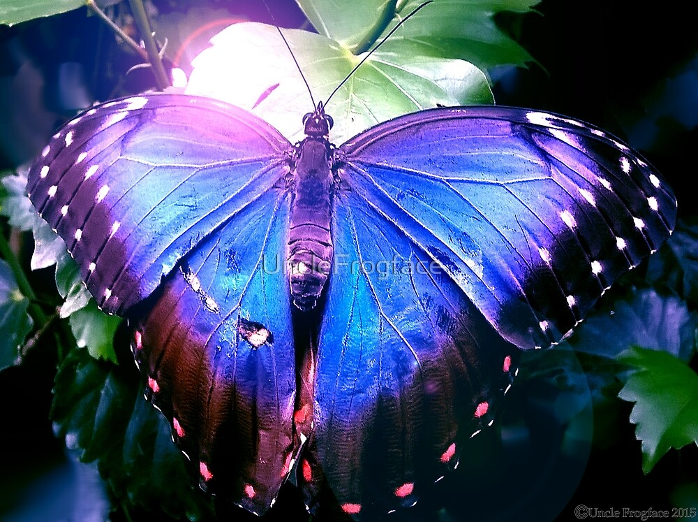 Blue Butterfly by UncleFrogface