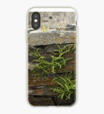 Spleenwort Maidenhair fern on wall at Cashelnagor iPhone Case