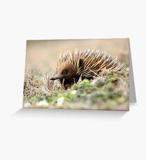 Echidna 3 (The Short-beaked Echidna (Tachyglossus aculeatus) Greeting Card